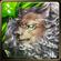 No. 1323 Earth Shattering Roar - Mufasa