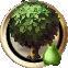 Plant pear tree.png
