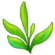 Tea Plant.png