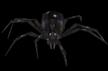 Araña.png