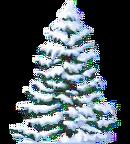 Snowy Fir.png