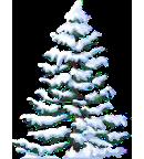 Snowy Fir