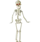 Spooky Scary Skeleton.png