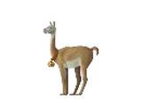 Wilma's Alpaca