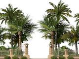 Palm Bos