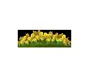 Golden Clovers