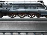 Silver Mallard