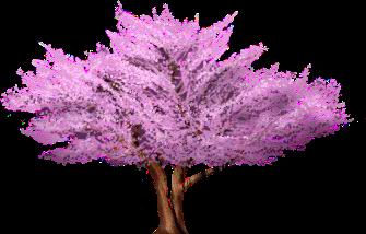 Cercis Tree