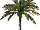 City Palm