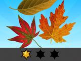 Autumn Achievements