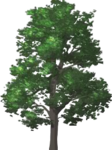 Hill Tree.png
