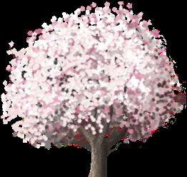 Double Cherry Tree
