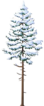 Snowy Pine.png