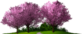 Cercis Grove.png