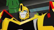 W.W.O.D.? Bee smirk