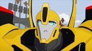 W.W.O.D.? Bee distraught