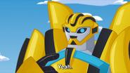 Bumblebee (Yeah.)