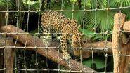 Belize Year of the Maya Segment 1