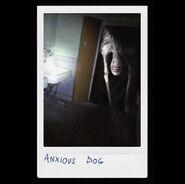 Anxious Dog Polaroid