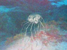 Ocean spider.jpg
