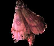 MothTransparent