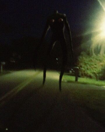 Night Walk.jpg