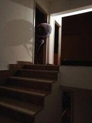 Floorboard Creak High definition.jpg