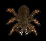 Spider closeup 2