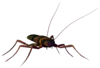 Literal Cockroach