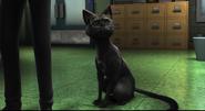 Archie Cat