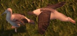 T3-Albatross.png