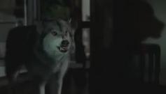True Blood-Werewolf
