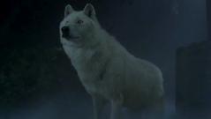 Debbie in wolf form