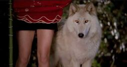 Alcide-wolf