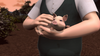 ThomasAndThePigs83.png