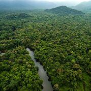 Therealamazonrainforest