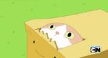 Principe caixa