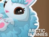 Arctic Bunnies