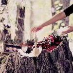 The Vampire Diaries ● If I Die Young