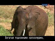 Телетекст (Россия К, 2012) 888 страница