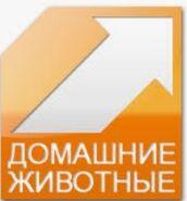 Домашние животные логотип (на сайте НТВ Плюс и на своём сайте) и в эфире 2009 года ТЕСТ вещание.png
