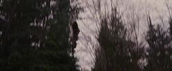Breaking-dawn2-movie-screencaps.com-3485.jpg