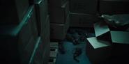 Dead rats