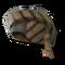 Nobleman's hat