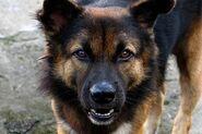 Пікча собаки 2