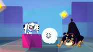 10 Dolly, Roxy, Snowball - Psie tańce