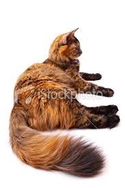 Squirrelfur