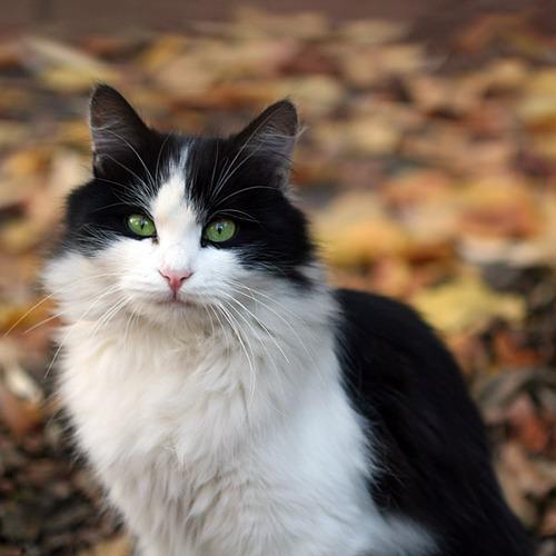 Mitzi (Kittypet)