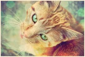 Sharpclaw (Cat)
