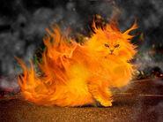 Fire-cat1